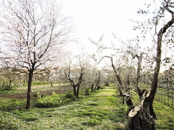Изображение 2. Тосканское масло.. Изображение № 9.