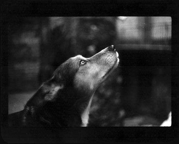 Джакомо Брунелли и«другие» животные. Изображение № 15.