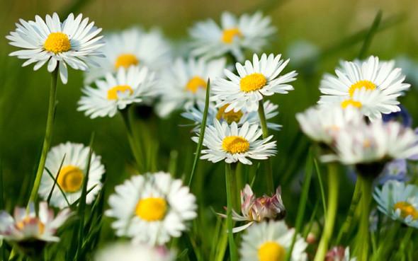 Весна идет! Создаем весеннее настроение. Изображение № 29.