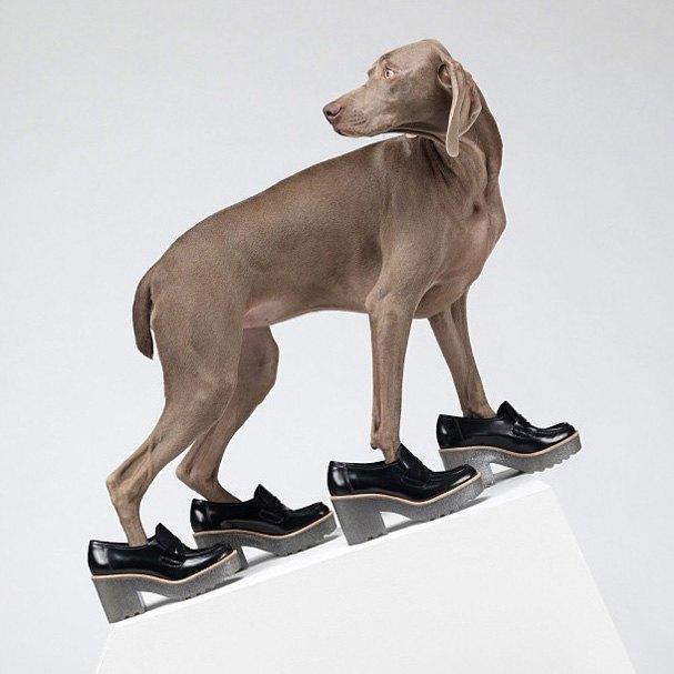 Acne одели собак в свою коллекцию. Изображение № 1.