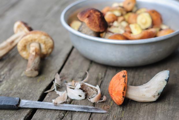 Всё, что нужно знать о грибах: Где собирать, какие покупать на рынке и как готовить потом