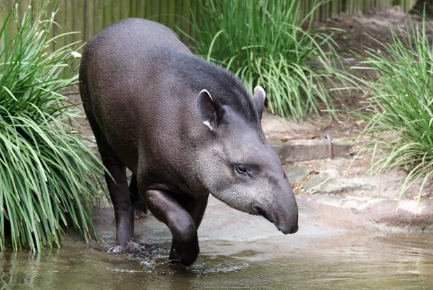 Как петербургские зоозащитники добиваются закрытия всех мини-зоопарков в городе  — Комментарий на The Village
