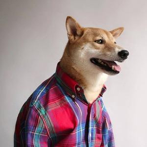 Сколько зарабатывают собаки и кошки из интернета — Мотиватор на The Village