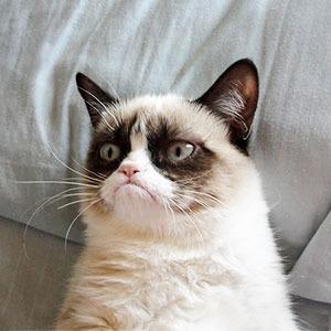 События недели: GusGus, Matisyahu и эволюция котиков — События недели на The Village