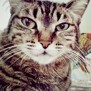 Музейные коты в снимках Instagram
