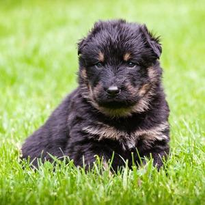 Выставка бездомных собак, театральный марафон в парке и летний «Ламбада-маркет»