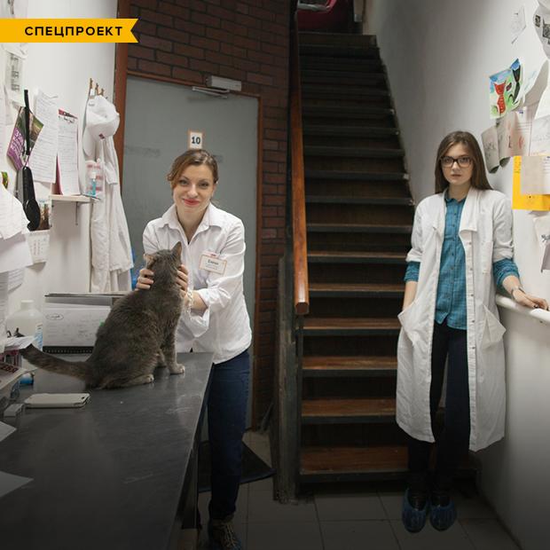 Коты и ты: Как помочь брошенным животным — Спецпроекты на The Village