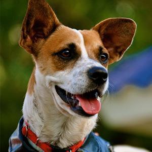 Иностранный опыт: Как устроены площадки для выгула собак в 5 городах мира