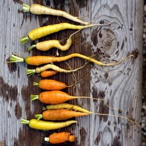 Как напомнить горожанам, откуда берётся еда — Иностранный опыт на The Village