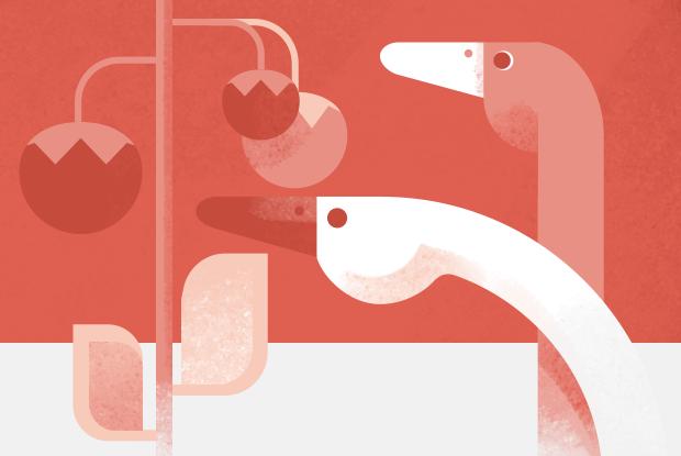 Что на самом деле значат слова «органик», «био» и «эко» в названии продукта в России? — Съесть вопрос translation missing: ru.desktop.posts.titles.on The Village