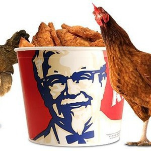 В Киеве появится сеть быстрого питания Kentucky Fried Chicken — Ситуация на The Village