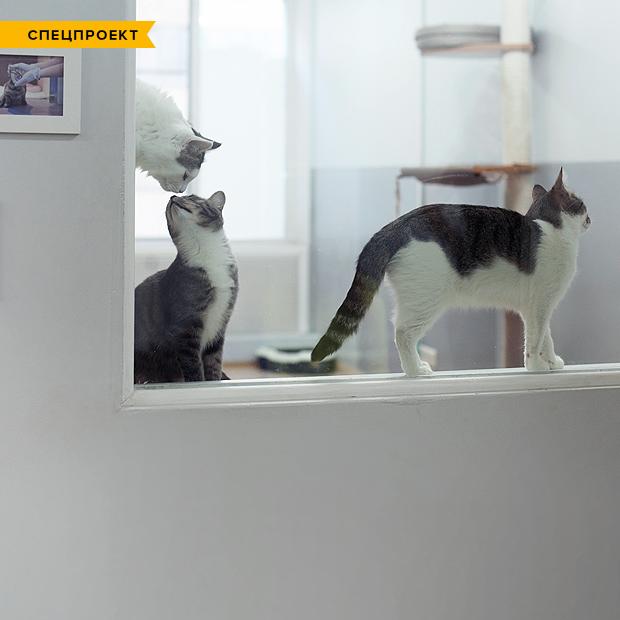 Кошкин дом: Как подготовить квартиру к появлению домашнего питомца — Спецпроекты на The Village