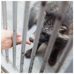 Биолог Елена Мигунова о наглости белок, хищных птицах в Кремле и об отношении москвичей к животным — Что нового на Look At Me