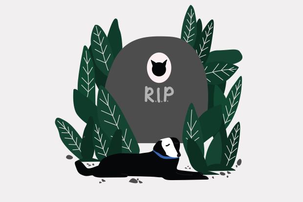 Сколько стоит похоронить домашнее животное? — Простые числа на Look At Me