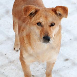 Иностранный опыт: Что делать сбездомными собаками — Иностранный опыт на The Village