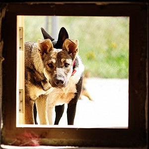 За нами хвост: собачье бешенство и новый приют для бездомных животных — Ситуация на The Village
