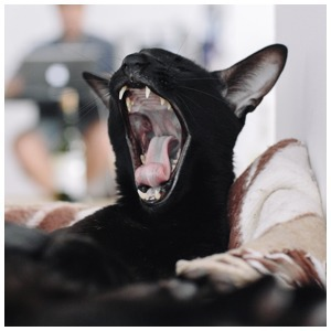 Удав Зина, кот Старки, рыба Крупская и другие животные в офисах