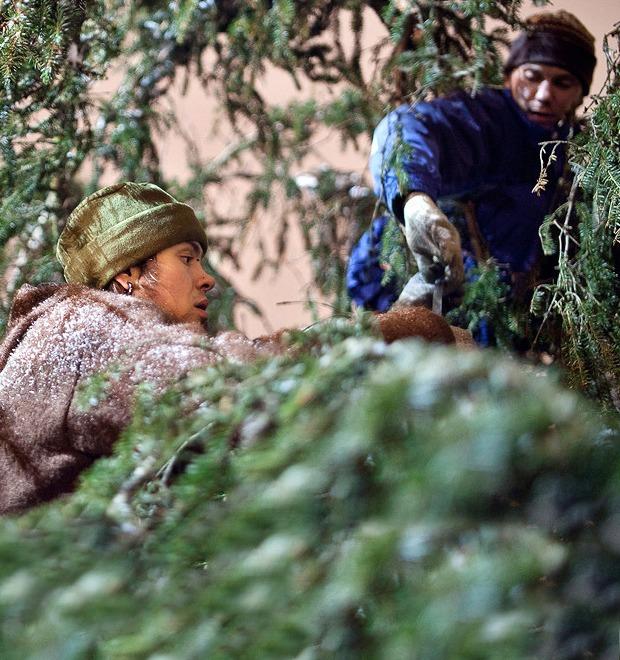 Фоторепортаж: Как устанавливали главную петербургскую ёлку — Фоторепортаж на The Village