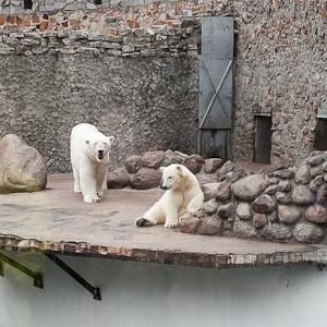 Как живёт и меняется Ленинградский зоопарк  — Ситуация на The Village