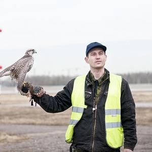 Подрезать крылья: Как работают орнитологи на аэродромах — Как всё устроено на The Village