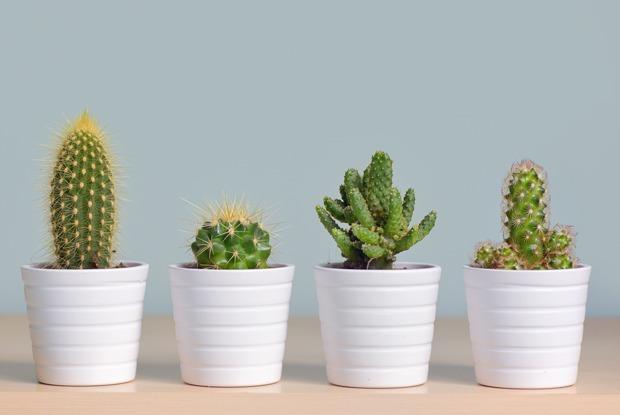 5 домашних растений, за которыми почти не нужно ухаживать — Дом на The Village