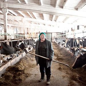 Репортаж: Как делают молочные продукты в «Лосево» — Как всё устроено на The Village