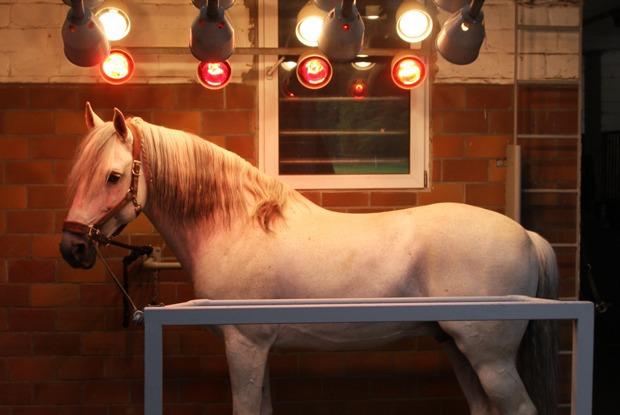 Зачем лошадям солярий? — Есть вопрос на The Village