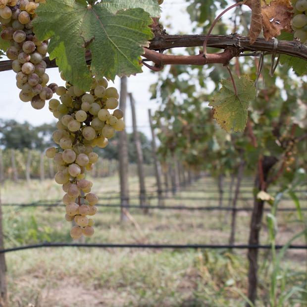 Как делают вино — Производственный процесс на The Village