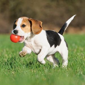 Пёс с ними: 6 приложений для владельцев домашних животных