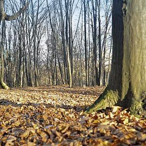 Киевские деревья получат статус памятников — Ситуация на The Village