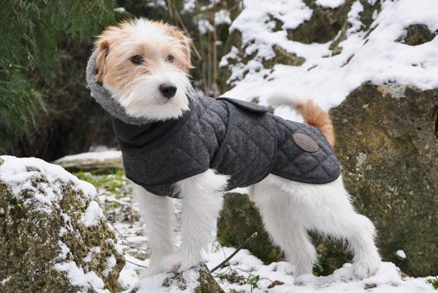 Как архитектор стала шить одежду для собак — Сделал сам на The Village