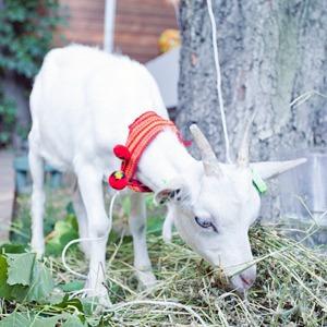 Натурпродукт: Фермеры Киева об органической еде — Еда на The Village