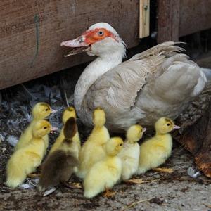Как заработать на птичьей ферме