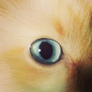 Осенние коты в снимках Instagram