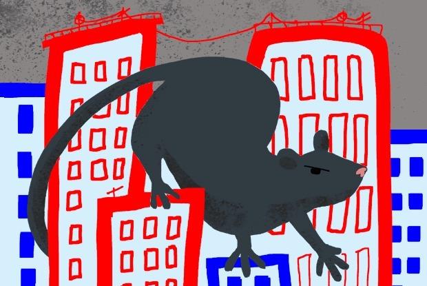 Есть ли в Москве нашествие крыс?