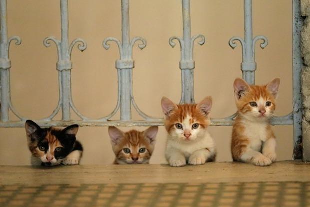 «Сурганова и оркестр», «Голубой Байкал» и кино про кошек  — Выходные в городе на The Village