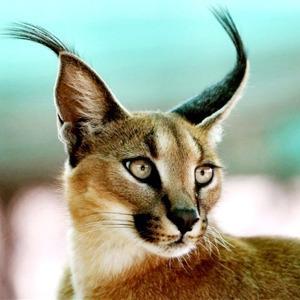 Кража кота за полмиллиона и ещё 7 громких происшествий с животными — Город на The Village