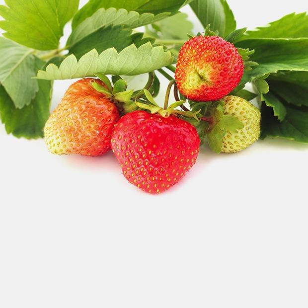 Как использовать неспелые фрукты? — Как надо translation missing: ru.desktop.posts.titles.on The Village