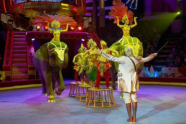 Фон для слона: Я работала в цирковом балете — Личный опыт на The Village