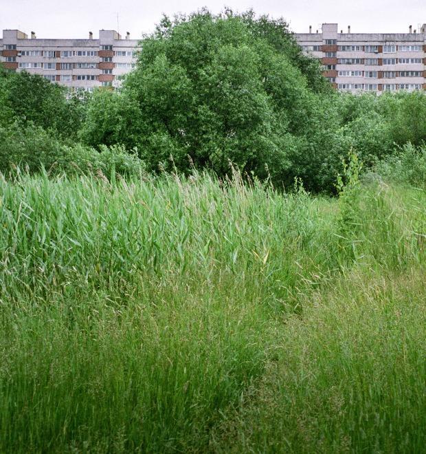 На районе: Красносельский глазами Антона Соколова — Галереи на The Village