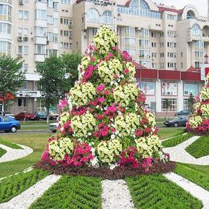 Киев украсят клумбами с символикой Евро-2012 — Евро-2012 на The Village