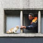 Кота за хвост: Как МЧС спасает кошек