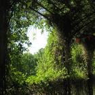 Парк усадьбы Трубецких