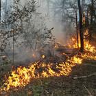 В Подмосковье ввели режим повышенной готовности к пожарам