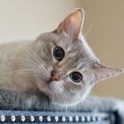 """Права и обязанности животных закрепили в законе """"О кошках и собаках"""""""