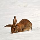 Понаблюдав за животными экологи предсказали снег в новогоднюю ночь