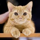 События недели: Карнавал в парке Горького, Врубель и Петров-Водкин, котики на ВВЦ