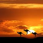 Австралия безопасная: сводки с зеленого континента