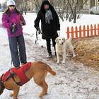 В петербургских парках могут появиться площадки для выгула собак