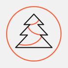Акция по сбору новогодних елок продлена